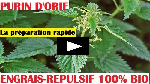 Purin d 39 ortie engrais rpulsif 100 biologique recette preparation - Purin d ortie utilisation ...